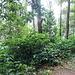 im Regenwald: wilde Vegetation