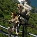 Gibraltar - Zaungäste.