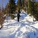 im direkten Abstieg durch den westlichen Teil des Richisauer Waldes