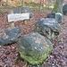 eine Ausstellung mitten im Wald: alpine Schiefer- und Sandsteine, etwas weiter dann auch Nagelfluh