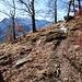 Unterhalb Alp Piano - Grüsse vom Alzascagebiet durch die Birkenwälder