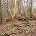 Der Wanderweg über unzählige Wurzeln auf den Altberg