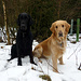 Shadow und Finnley warten gespannt wie es weitergeht.
