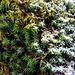 Schneegrenze - einmal anders