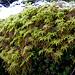 Vielfältige Flora in Bonsaigröße