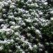 Hier hat der Winter schon #zugeschlagen'... :-(