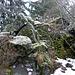 Der Steinknock setzt dem ambitionierten Wanderer schier unüberwindlichen Steilfels entgegen.