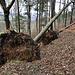 auf dem Wanderweg hat es aktuell zahlreiche umgeknickte Bäume