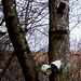 Der Baum als Tassenschrank