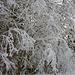 Winter Impressionen vom Tschingelsee (Baum)