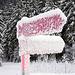Der Trail beim Tschinegelsee, vom Motiv her, das beste Bild des Tages ((-:
