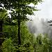 die schönen Seiten des nassen Waldes