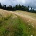 das Gras ist bald stehend dürr