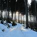 Winterwanderweg zum Pfänder