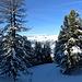 Aufstieg durch tiefverschneiten Wald auf guter Spur.