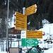<b>Questa volta decido di partire da Camperio / Piana (1223 m). L'itinerario è, almeno per il primo tratto, all'ombra, tuttavia non comporta nessuna difficoltà tecnica: è una strada forestale, l'ideale per un allenamento d'inizio stagione.</b>