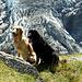 Finny und Shaddy vor dem Eisbruch des Unteren Grindelwald<br />gletschers.