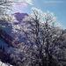 Leuchtend verschneite Bäume