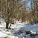 Nei pressi  della quota 880 m una leggera coltre di neve rende più affascinante il bosco di castagni