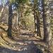 Facile salita nel bosco