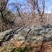 La roccia di Pianvalle su cui si trovano coppelle ed incisioni rupestri.