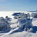 Oben auf dem Gipfel werden aus Legföhren Eisbären
