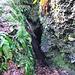Der Schlund II. Zurzeit durch einen morschen Baumstamm halb versperrt, aber Schlanke kommen durch.