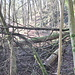 Öfters der Fall: Umgestürzte Baumstämme versperren den Weg und zwingen zu Umwegen. Naturreservat: Nur der Wanderweg in der Mitte des Areals wird nach Sturmschäden freigeräumt.