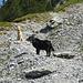 Weiter geht's bergauf.<br />Hinweis für Hundebesitzer/Hunde: bis zur Engelhornhütte eine recht trockene Angelegenheit (nur eine Quelle/Bach unterwegs)
