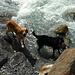 Badespaß im Gletscherbach