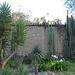 Toller Garten mit San-Pedro-Kakteen (Hacienda Guachala)
