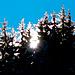 leuchtende Baumspitzen