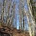 Waldabschnitt vor den Schenkenberghöf