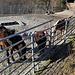 Pferde bei den Schenkenberghöf