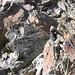 Klaus im Ötztaler-Stubaier Altkristallin der Wazespitze