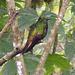 Kolibri. Im Flug viel zu schnell für die Kamera