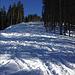 Diese Schneise wurde für den neuen Weg geschlagen. Vorher ging der Weg etwas rechts durch den Wald.