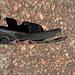 I sandali di Mauro ormai defunti :-(