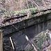 ...das von der Natur zurückgewonnene Trasse der Klein-Rigi-Bahn seit 1978 - II