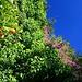fruchtbare Alcazaba