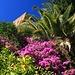 es blüht üppig in der Alcazaba von Málaga