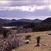Hügellandschaft auf Antigua,die Kuppe mit der Antenne ist der Boggy Peak