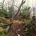 Überreste der Fluchtburg auf dem Mont Terri