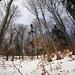im lichten, hübschen Wald unterhalb der Krete ist die Schneedecke nun geschlossen