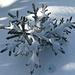 ein Schnee Stern