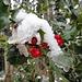 Stechpalmen-Beeren - mit Schmuck aus Schnee und Eis