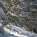 Aufstieg im Winterwald