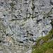 Der Einstieg des Klettersteigs, die erste Leiter; rechts davon das erste (Gras-)Band.