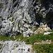 Die nächste  Leiter führt über eine weitere Steilstufe.