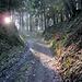 Uralter Hohlweg an der Olegge im Osterwald